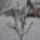 Téli képek 2013
