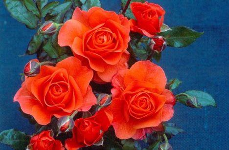 Juliannáknak Boldog Névnapot kívánok sok szeretettel!
