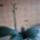 Orhidea-032_1625823_9555_t
