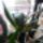 Orhidea-033_1625825_6294_t