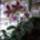 Orhidea-034_1625827_5539_t