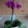 Orhidea-036_1625832_5114_t