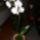 Orhidea-037_1625834_1877_t