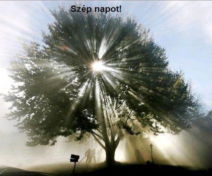 élet fa