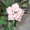 Rózsaszin virág