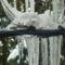 A hó és jég fogságában. 2013.jan.21 (Lilaakác.)