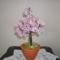 gyöngy fám 3