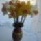 nárciszok
