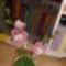 Orchideám 3