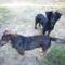 Szomszéd kutyái