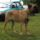 Bullmasztiff-004_1631292_5967_t