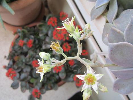 tavasz a balkonon 002