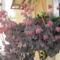 tavasz a balkonon 003