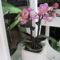 tavasz a balkonon 016