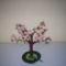Tavasz-virágzó barack fa