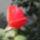 Anita virágai