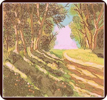erdő 2
