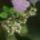 Tavaszi pályázat növény kategória