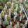 Dósa Béla:csere-eladó kaktuszaim