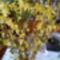 Aranyveszö/Egy kis tavasz a szobába/