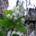 Décsei Tiborné, kertem