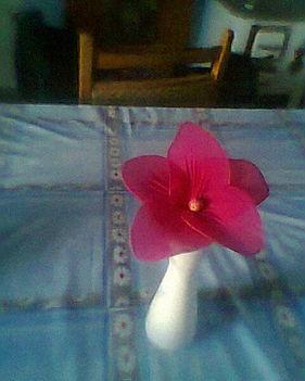 harisnya virágaim