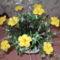 Horgolt virág Klárinak 002
