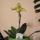 Kati orchideái