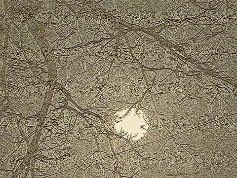 napfényes kopasz ágak