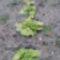Tél végefelé 4,salátasor