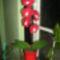 Piros orchidea kérésre