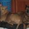 Lejla és Tigi