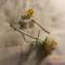 az első virágaim