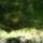 Hargita_megye_termeszetvedelmi_teruletei-009_1645557_9510_t