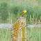 Hargita megye természetvédelmi területei 5