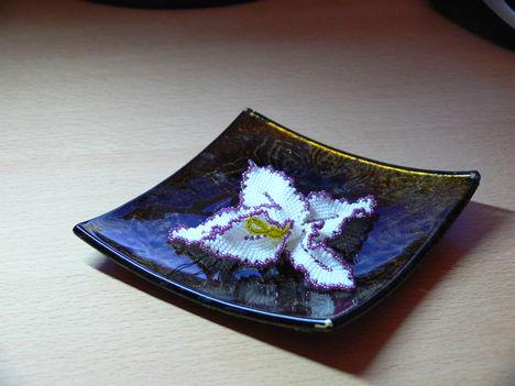 P1040100 Orchidea