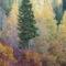 Bandi Laci őszi képei 1