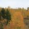 Bandi Laci őszi képei 3