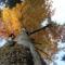Bandi Laci őszi képei 5