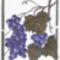 C019 20x25 cm, gyümölcs csendélet