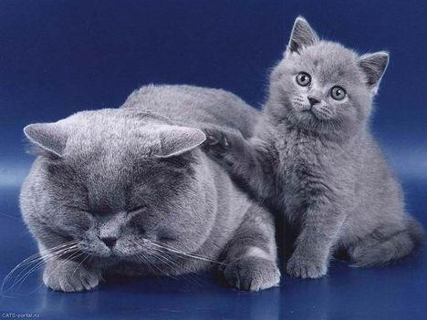 Cica-Kutya-8