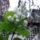 Décsei Tiborné csodás növények
