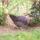 Is_hazi_kedvenc_164575_64023_t