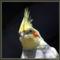 Papagaj1