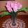 Rozsaszin_tulipan_csokor_1640368_4602_t