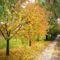 szép őszi szinek