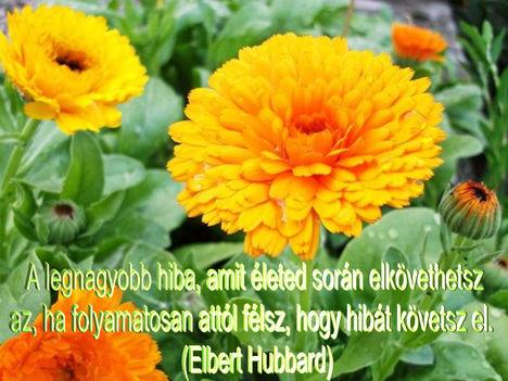 Virágok és bölcsességek 18