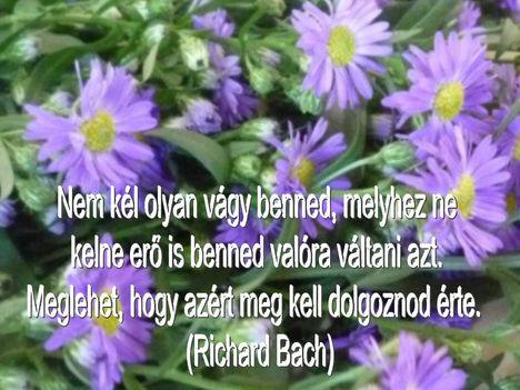 Virágok és bölcsességek 20
