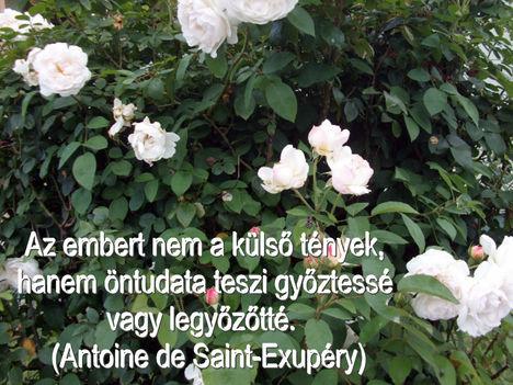 Virágok és bölcsességek 26