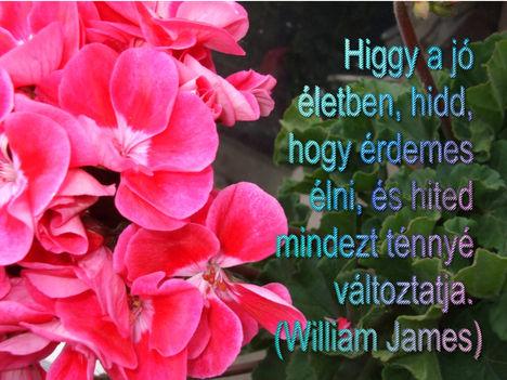 Virágok és bölcsességek 2